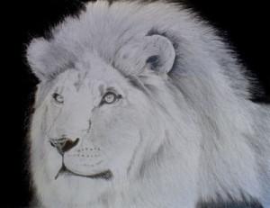 Dibujos a lápiz de leones (1)