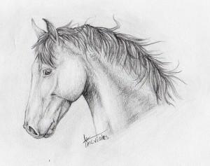 11 dibujos a lápiz de caballos (10)