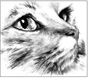 10 dibujos a lapiz de animales (1)