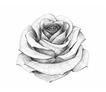 como-dibujar-una-rosa-realista-paso-a-paso