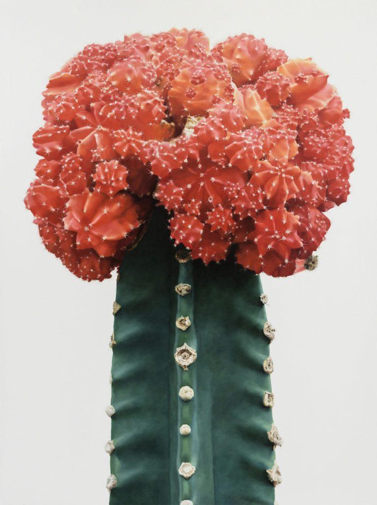cactus-hiperrealistas-con-lee-kwang-ho-3
